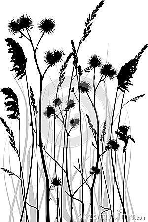 Gräs silhouetten