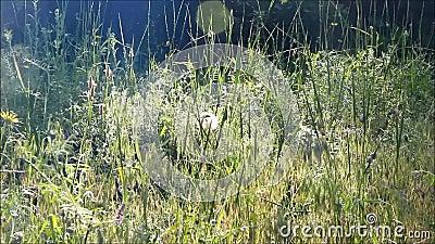 gräs thick arkivfilmer