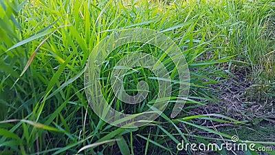 Gräs växer bredvid banan arkivfilmer