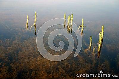 Gräsvatten