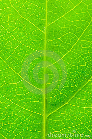 Grön leave