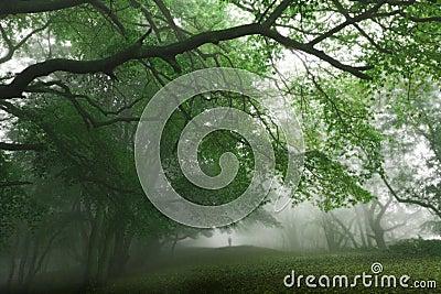 Grön magical skog
