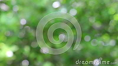 Grön miljö och bakgrund med suddig effekt stock video