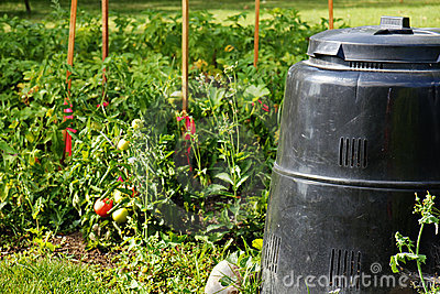 Grönsak för fackcompostträdgård