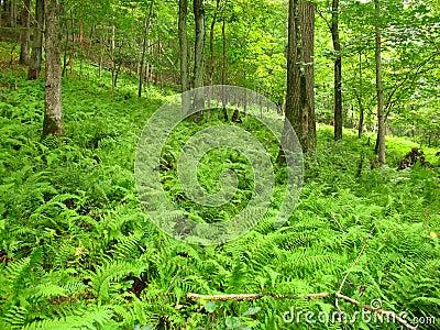 Grönskande skog
