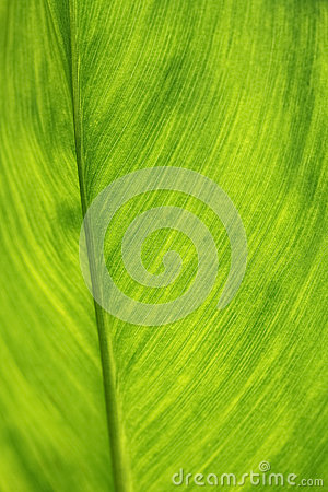 Grönt blad som bakgrund