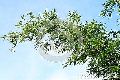 Grüner Bambusbaum