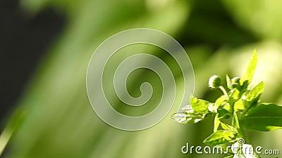 grüner gesunder Hintergrund der Natur stock footage