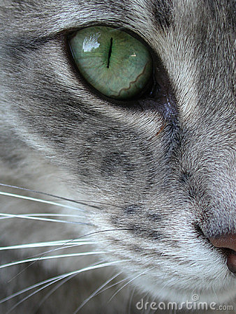 Grüner Katzenauge-Makroabschluß oben