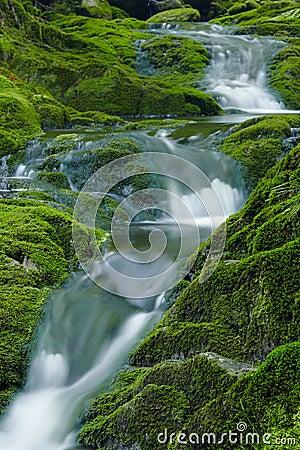 Grüner Nebenfluss
