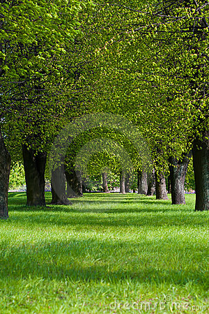 Grüner Weg im Park