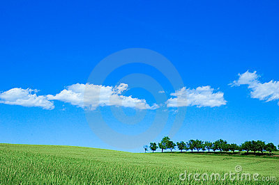 Grünes Feld 4