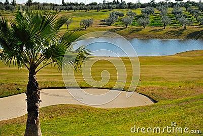 Grünes Golf