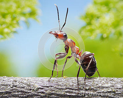 Graceful ant on branch