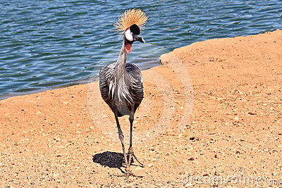 The graceful bird with magnificent plumage