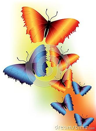 Graceful butterflies