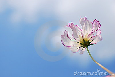Graceful flower in blue sky