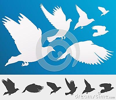 Graceful flying birds