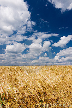 Grain against blue sky with white clouds