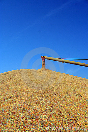 Grain auger at work
