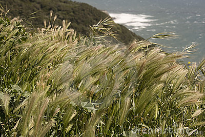 Grain by the coast