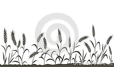 Grain ears.