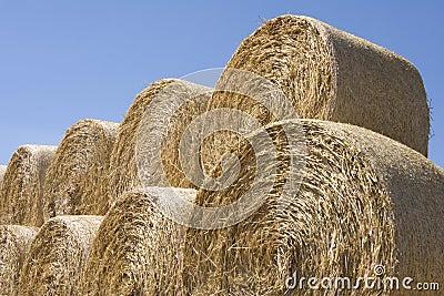 Grain field12