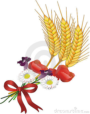 Grain and flowers