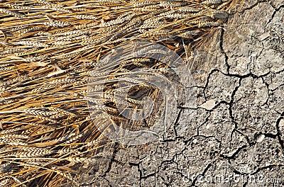 Grain and terra