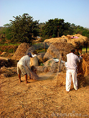 Grain Thrash