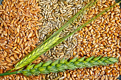 Grains and Ears