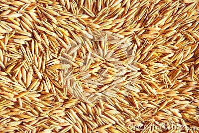 Grains of oat