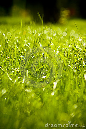 Grama molhada verde