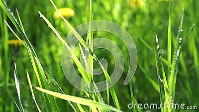 A grama que verde a chuva deixa cair o sol está brilhando filme