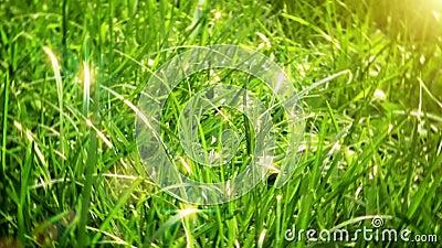A grama verde zumbe dentro video estoque