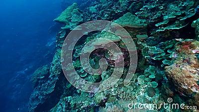 Gran barrera de arrecife