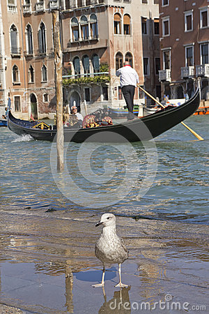 Grand Canal with Gondola (Venice, Italy) Editorial Photography