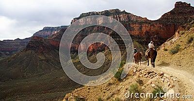 Grand Canyon Horseback riding
