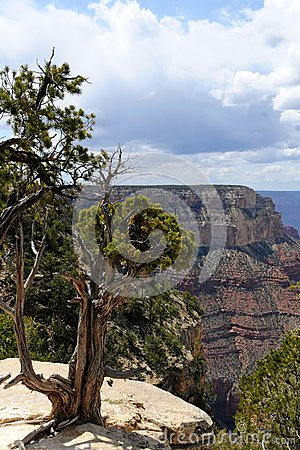 Grand Canyon National Park VIII