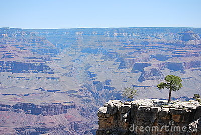 Grand Canyon with tree in forefront
