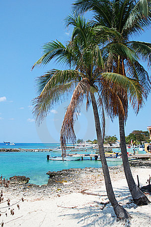 Free Grand Cayman Palms Stock Photo - 14684710