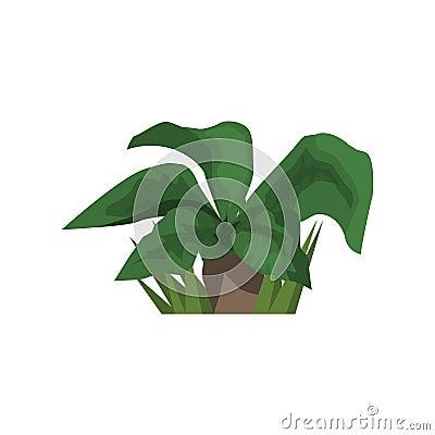 Grand l ment de paysage de jungle de plante tropicale de for Plante jungle
