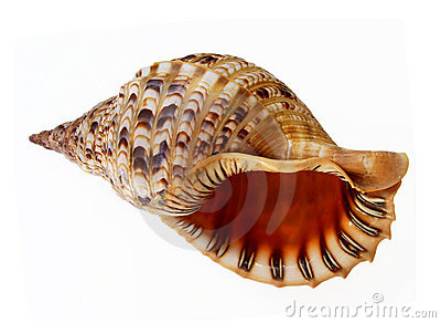 Grand parler de seashell