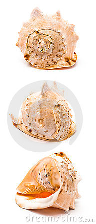 Grand seashell
