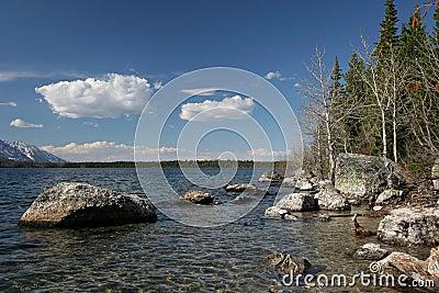 Grand teton jenny lake shoreline