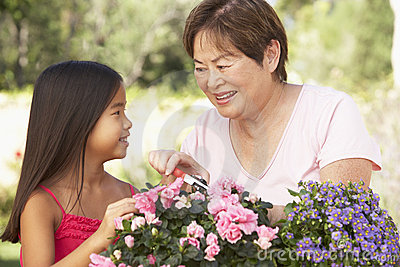 Granddaughter And Grandmother Gardening Together