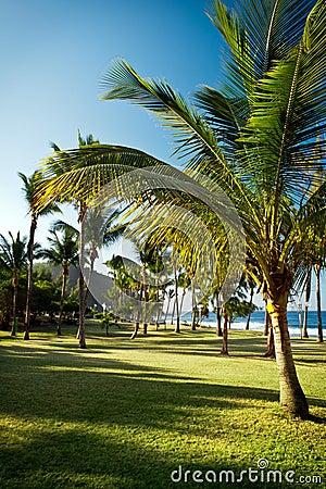 Grande Anse beach, Reunion Island