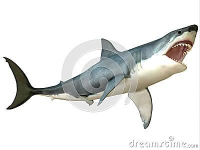 VIDEO Un grand requin blanc attaque un bateau de touristes!