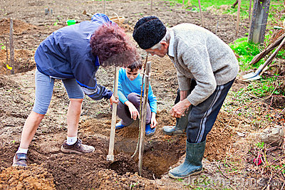 Grandfather, daughter and grandson planting trees