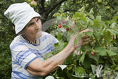 Grandmother and in her garden